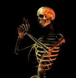 骨头9 库存图片