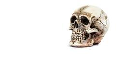 头骨模型 免版税图库摄影