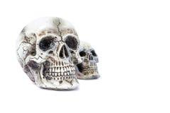 头骨模型 图库摄影