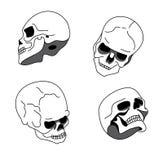 头骨用不同的位置 库存照片