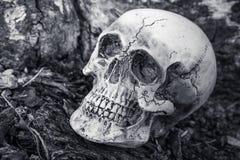 头骨静物画在干树背景的 免版税库存图片