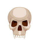 头骨风格化动画片传染媒介例证 库存图片