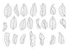 骨骼叶子烘干叶子排行了设计,并且黑单行线路叶子样式黑色带来上色美丽装饰自然decorat 皇族释放例证