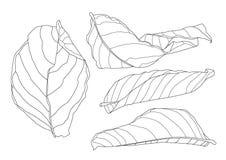 骨骼叶子烘干叶子排行了设计 皇族释放例证