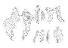 骨骼叶子烘干叶子排行了设计 库存例证