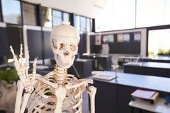骨骼在一间小学科学教室 图库摄影