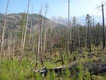 骨骼山森林 免版税库存图片