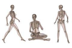 骨骼机体的女性 库存例证