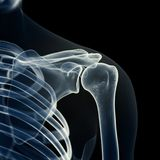 骨骼肩膀 向量例证