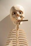 骨骼 库存图片