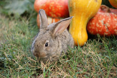 骨髓兔子蔬菜 免版税库存照片