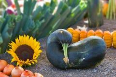 骨髓好的蔬菜 免版税图库摄影