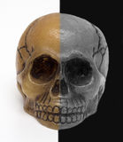 头骨,黑白背景 免版税库存图片