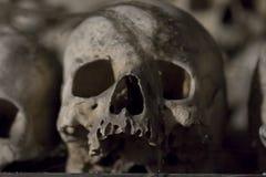 头骨-恐惧和打颤 库存图片