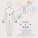 骨头的食物 向量例证