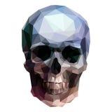 头骨 向量例证