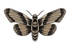 骷髅飞蛾 库存图片
