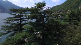 高云杉和杉树在江边增长在意大利 股票录像