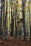 高位子在森林里 免版税库存照片
