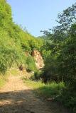 高加索的森林 库存照片