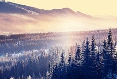 高加索佐治亚gudauri山冬天 免版税图库摄影