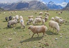 高加索山脉的草甸,乔治亚 免版税库存照片