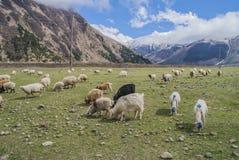 高加索山脉的草甸,乔治亚 免版税库存图片