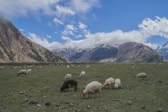 高加索山脉的草甸,乔治亚 免版税图库摄影
