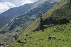 高加索山脉,额尔古纳峡谷  向Shatili的路与ancien 库存图片