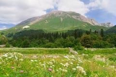高加索横向山北部全景 免版税图库摄影