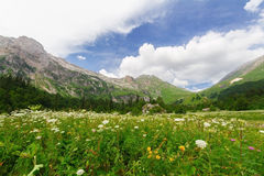 高加索横向山北部全景 库存图片