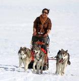 国际种族拉雪橇狗,青苔,瑞士 免版税库存照片