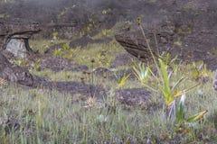 高原Roraima tepui -委内瑞拉的异常的古老岩石, 免版税库存图片
