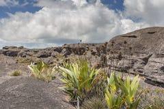 高原Roraima tepui -委内瑞拉的异常的古老岩石, 库存照片