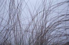 高变薄在紫色灰色天空背景的干草  免版税库存照片