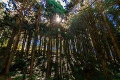 高在森林里 免版税库存图片