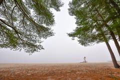 高在雾在一个有雾的秋天11月早晨围拢的杉木和云杉 免版税库存照片
