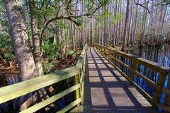 高地吊床国家公园佛罗里达 库存图片
