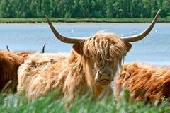 高地居民湖边苏格兰人 图库摄影