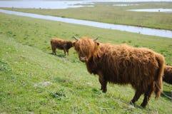 高地居民苏格兰人 图库摄影