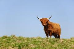 高地居民苏格兰人 免版税库存图片