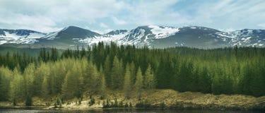高地山和森林 免版税库存图片