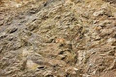 高地山羊山羊属山羊家庭坐光秃的岩石山 图库摄影