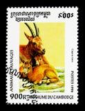 高地山羊山羊属高地山羊,野生动物serie,大约1996年 免版税库存图片