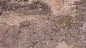 高地山羊跑的牧群的空中射击在陡峭的山的 股票录像