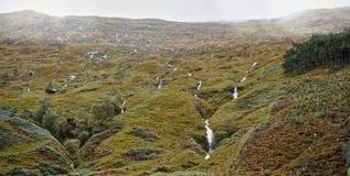 高地横向苏格兰人 免版税库存图片