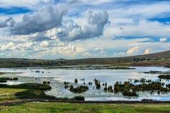 高地的湖与在白色和灰色云彩下的绿色芦苇 库存照片