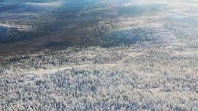 高地顶视图与具球果森林的在冬天 英尺长度 美好的全景积雪密集具球果 股票视频