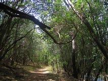 高大的树木之间的被遮蔽的道路 库存照片