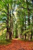 高大的树木和秋天路大道  免版税库存照片